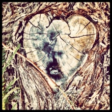 nature; natural heart shape in a tree trunk, iphoneography, instagram