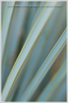 abstract photography, agave, desert landscape, scottsdale, arizona, original photography by [en]frame photography by rachel boyer