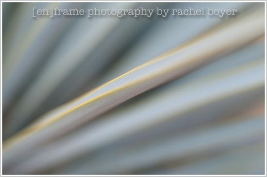 abstract photography, agave, desert landscape, scottsdale, arizona, original photography by [en]frame photography by rachel boyer
