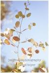 trees, foliage, scottsdale, arizona