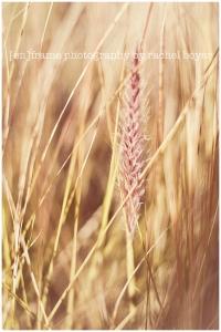 soft light, wild grass, fine art photograph