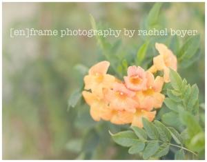 fine art photograph