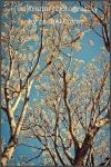 winter trees, blues skies in arizona
