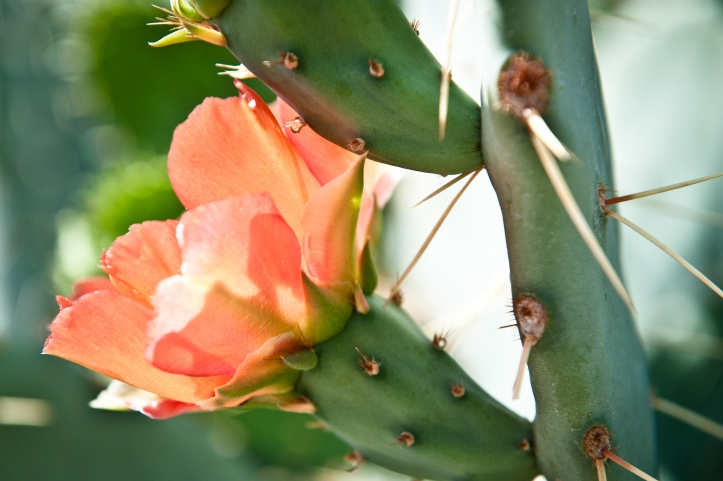 image by [en]frame photography by rachel boyer; photographed at the desert botanical garden in phoenix, arizona