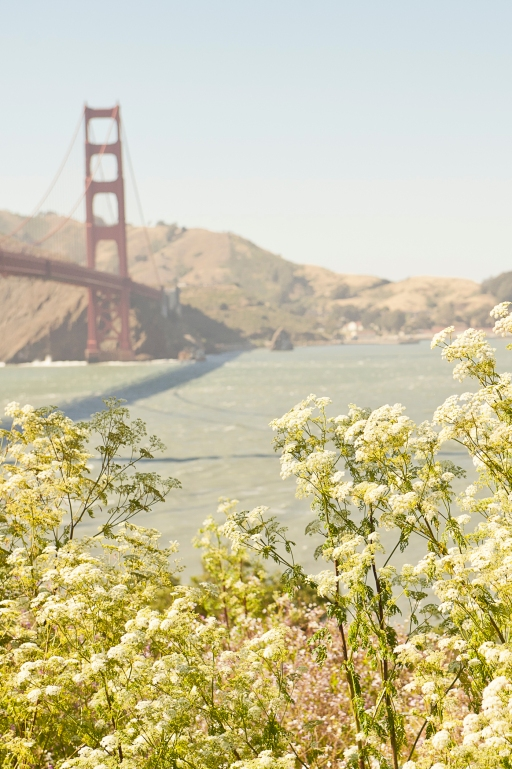 california wildflowers and golden gate bridge in the background