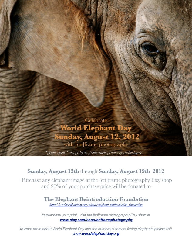 raising funds for the Elephant Reintroduction Foundation
