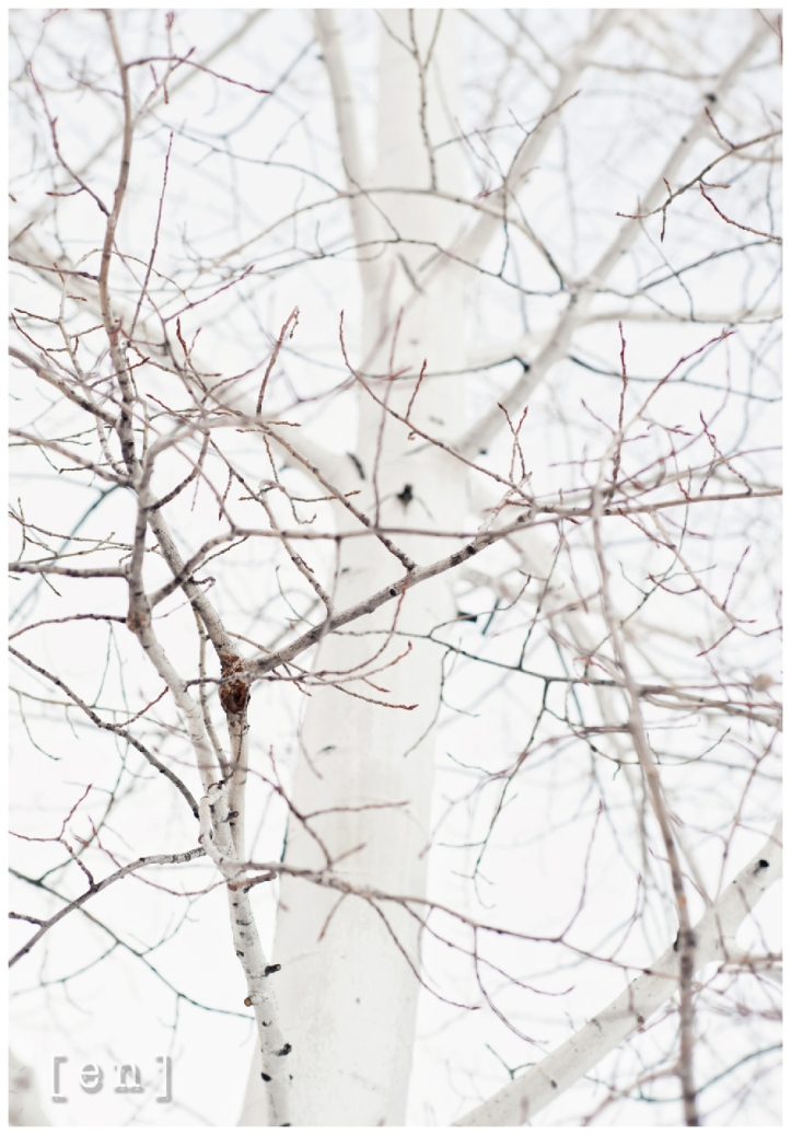 perspective on a birch tree in winter