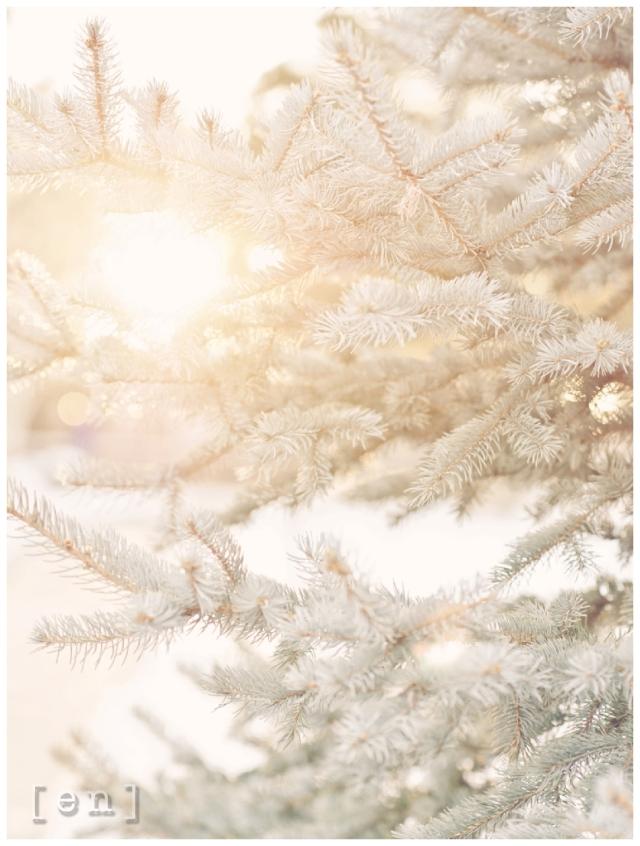 winter sunlight; winter photography www.enframephotography.com