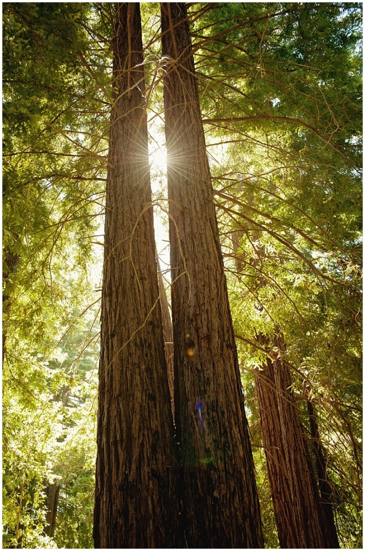 sun flare, sunlight, travel photography, Redwoods, Big Sur, California